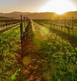 Everything You Need to Know About Ironstone Vineyards in Murphys, CA