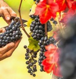 Best Wineries in Murphys, CA