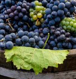 Why You Need to Attend the 2018 Calaveras Grape Stomp