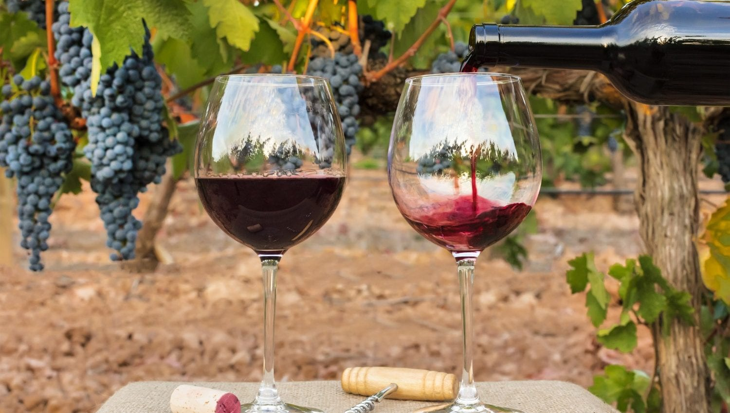 Twisted Oak Winery wine glasses