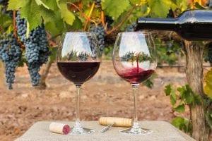 twisted oak winery barrels
