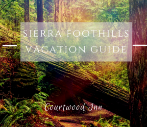 graphic with trees in background and text that says sierra foothills vacation guide