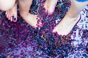 grape stomp