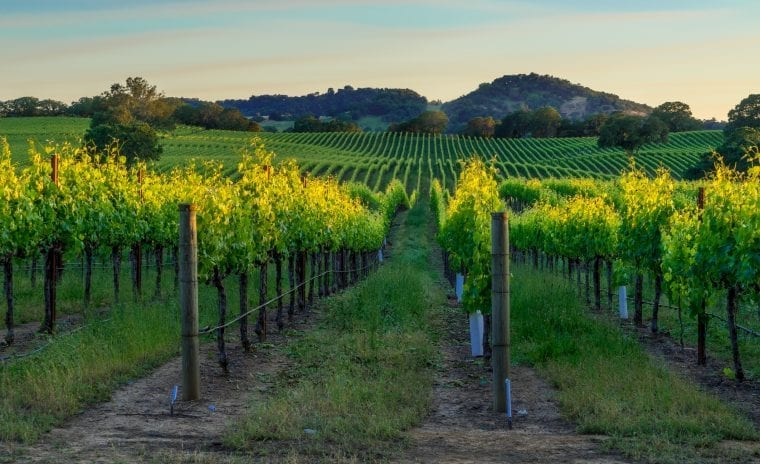 vineyard in northern california
