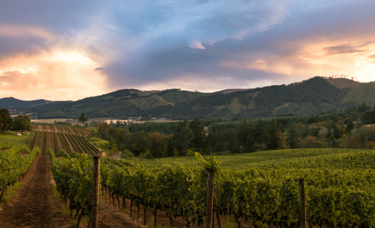 sunset at winery